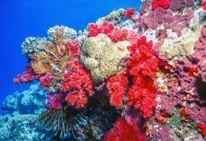 Najam Automobila Coral Coast, Fidži