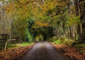 Najam Automobila Omagh, Sjeverna Irska